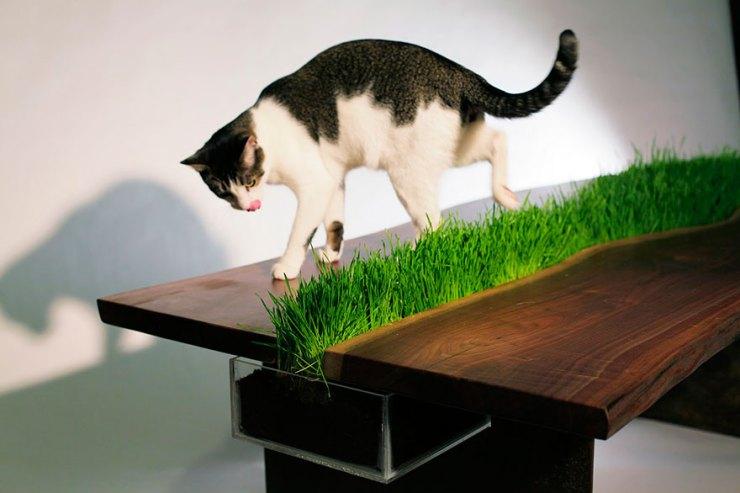 kedi için masa