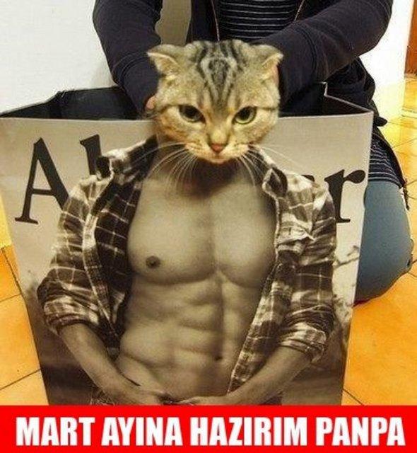 mart-ayina-hazirlanan-kedi-d