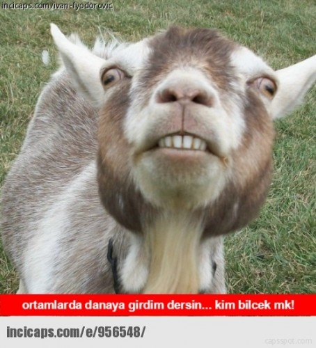 en-komik-kurban-bayrami-capsleri-499511-8