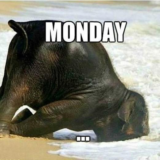 monday-pazartesi