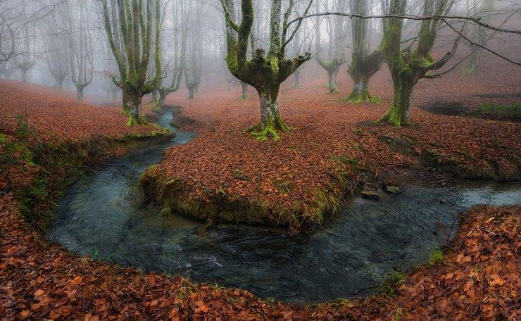 sonbahar doğa fotoğrafı