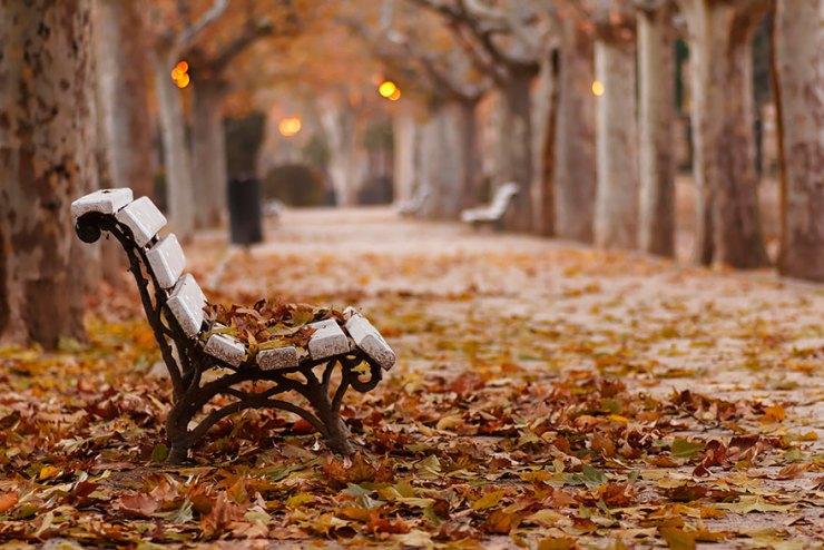 sonbahar yaprak fotoğrafları