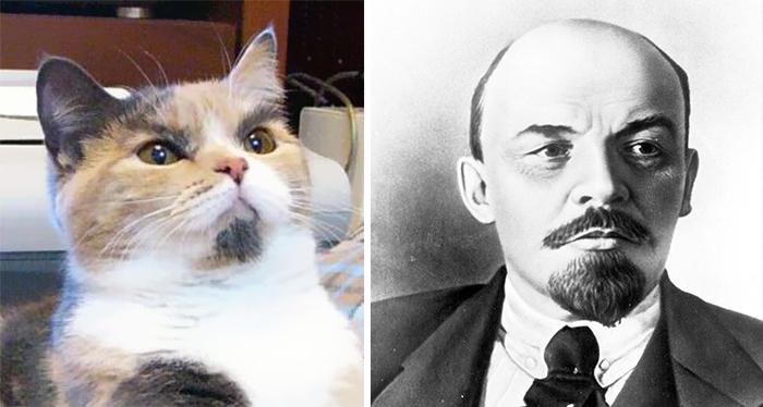 Lenin'e benzeyen kedi