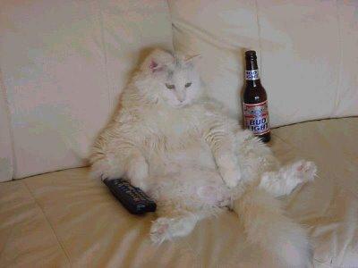 TV İzleyen kedi