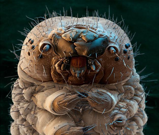 Böcekçik