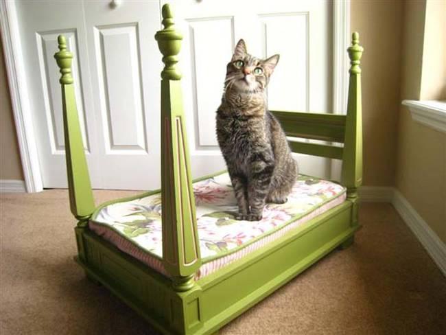 Eğer kediniz bir prensesse bu tam size göre