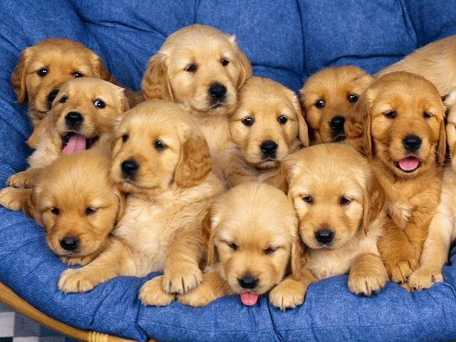 Köpeklerle ilgili ilginç bilgiler9