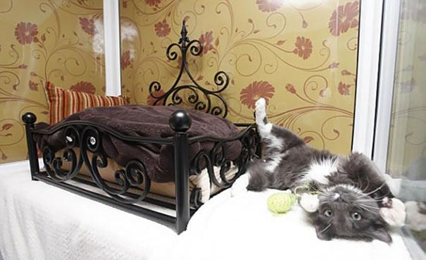 Konforuna Düşkün Kedi