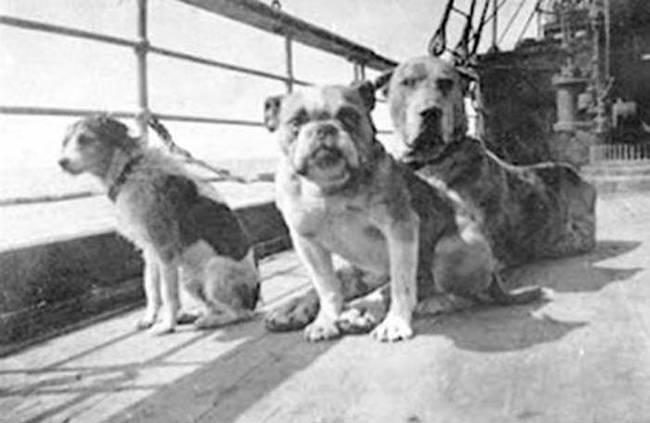 Titanic'ten kurtulan köpekler