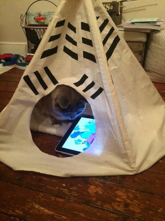iPad ile oynayan kedi