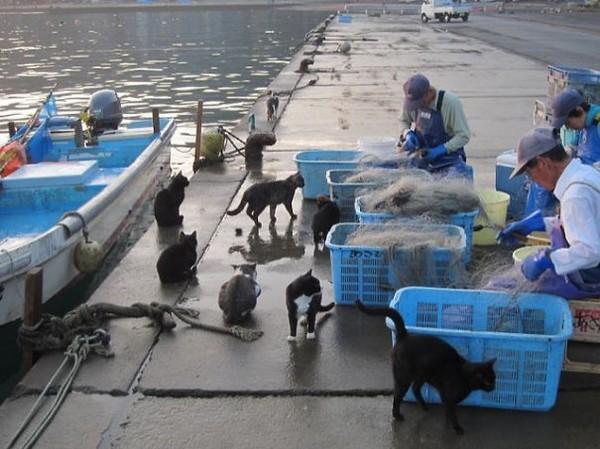 japonya-kedi-adaları