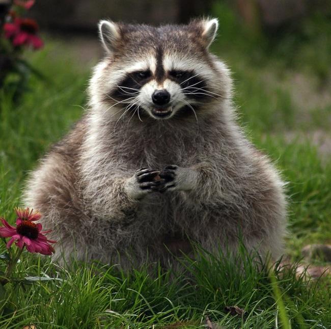 kötü plan yapan hayvan fotoğafları-65441