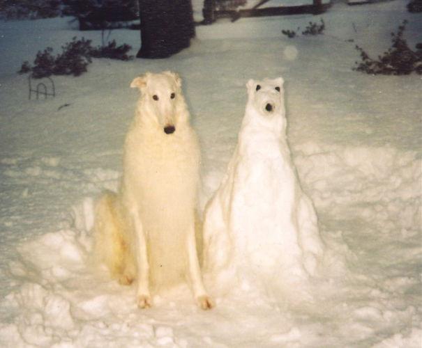 Kardan hayvanlar-3