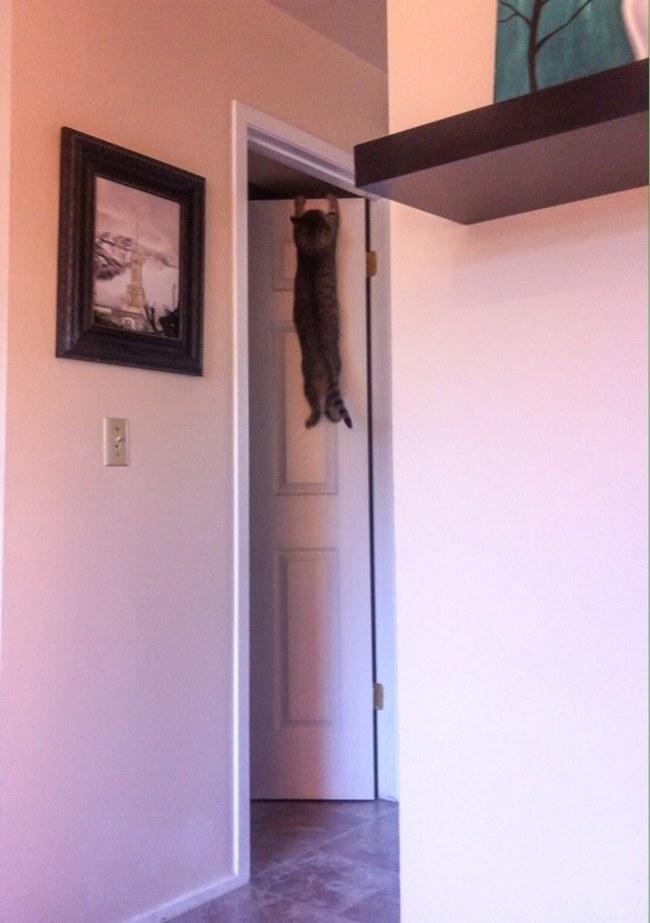 tırmanmış kedi