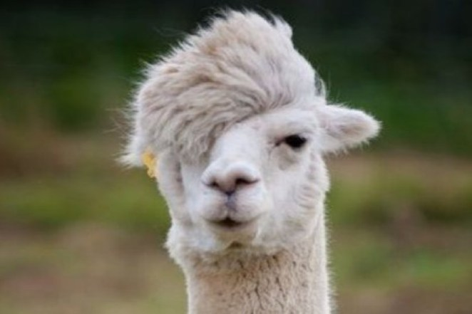 emo saçı