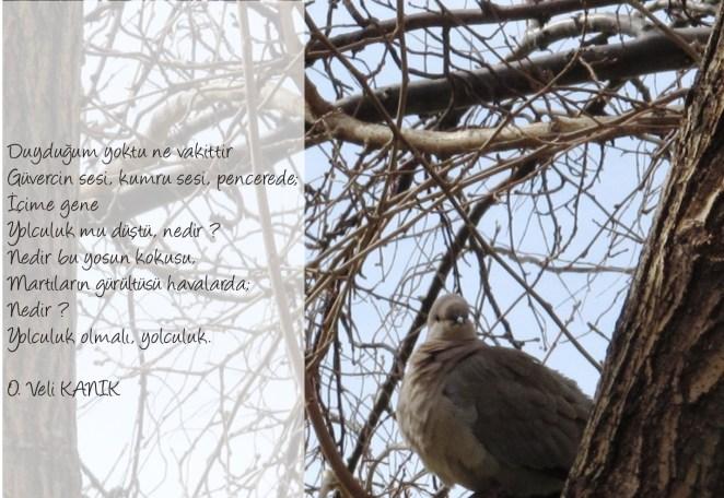 kumrulu şiir