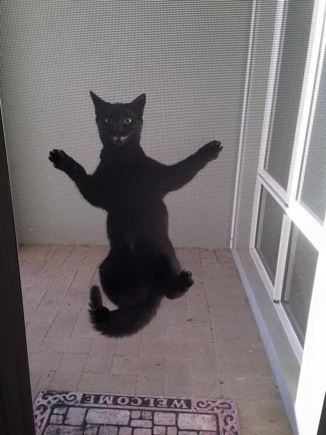 Lütfen beni içeri al diyen kediler 4