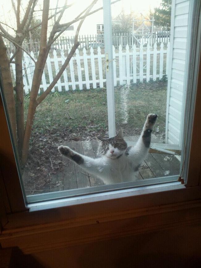 Lütfen beni içeri al diyen kediler 8