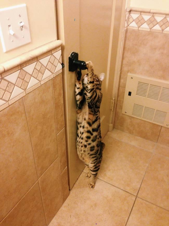 Lütfen beni içeri al diyen kediler