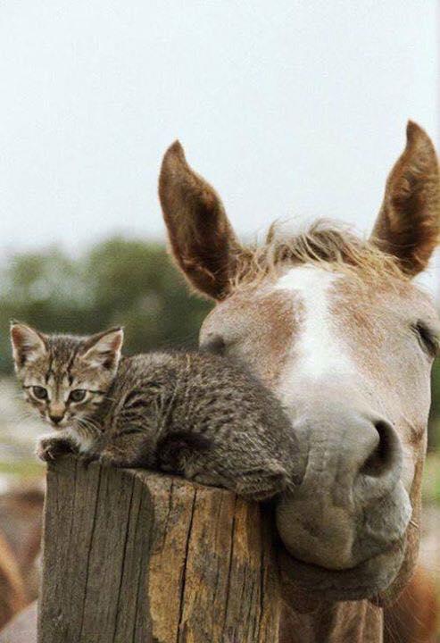 at ve kedi dostluğu