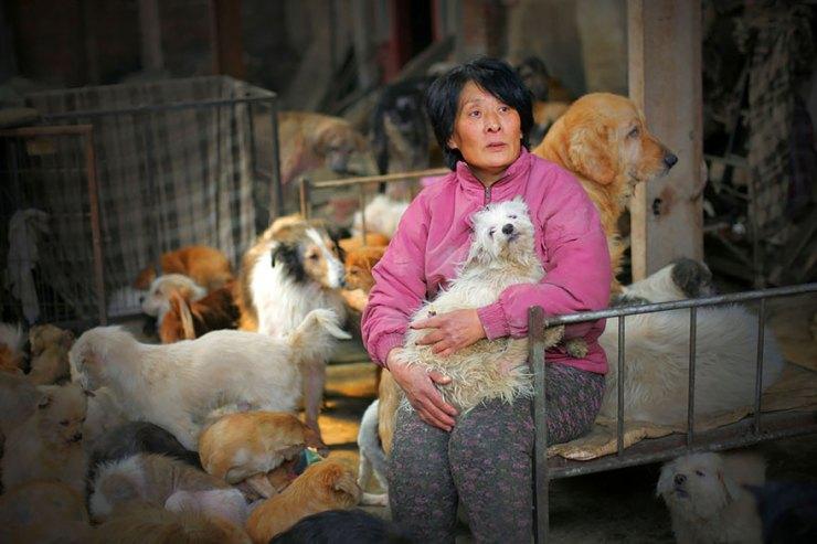 Yulin köpek yeme festivali 4