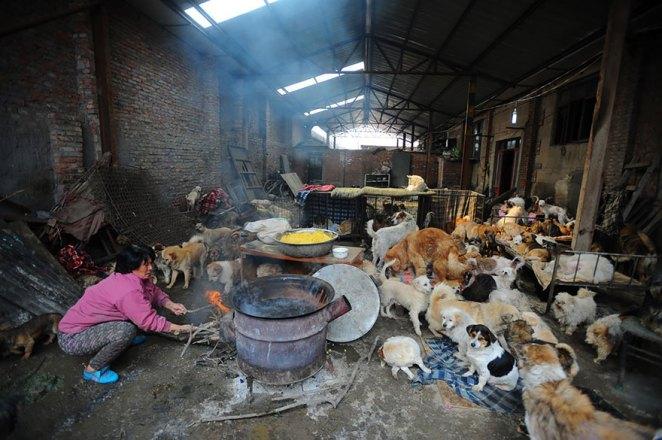 Yulin köpek yeme festivali 7