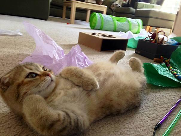 minnoş kedi