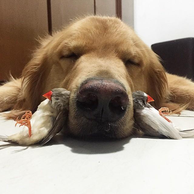 kuş ve köpek dostluğu