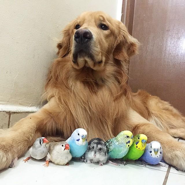 kuşlarla dost olan köpek