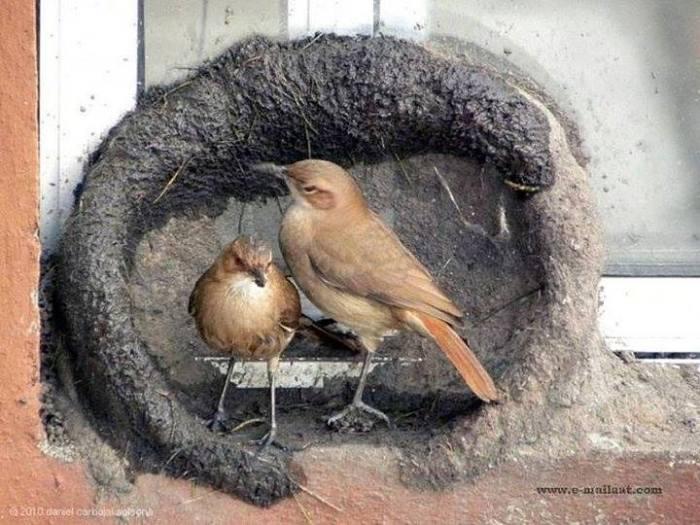 Kuşların yuva yapımı 4