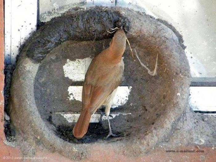 Kuşların yuva yapımı 6