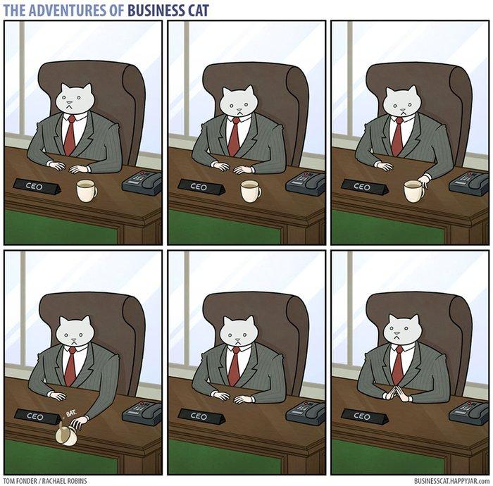 Kedi patron olsa