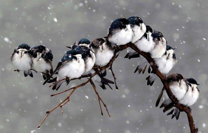 birlikte duran kuşlar