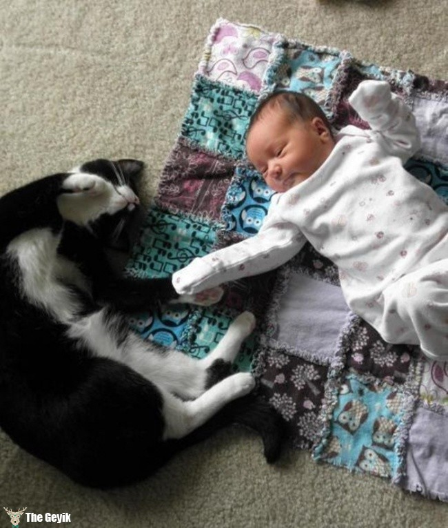 çocukla uyuyan kedi