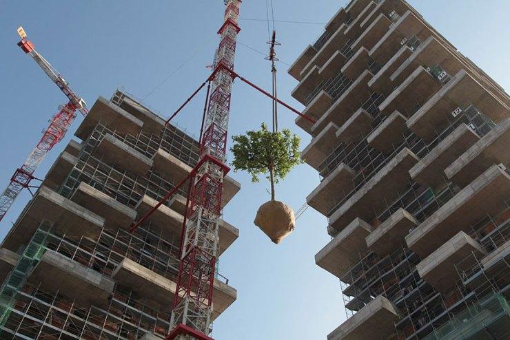 ağaçların taşınması