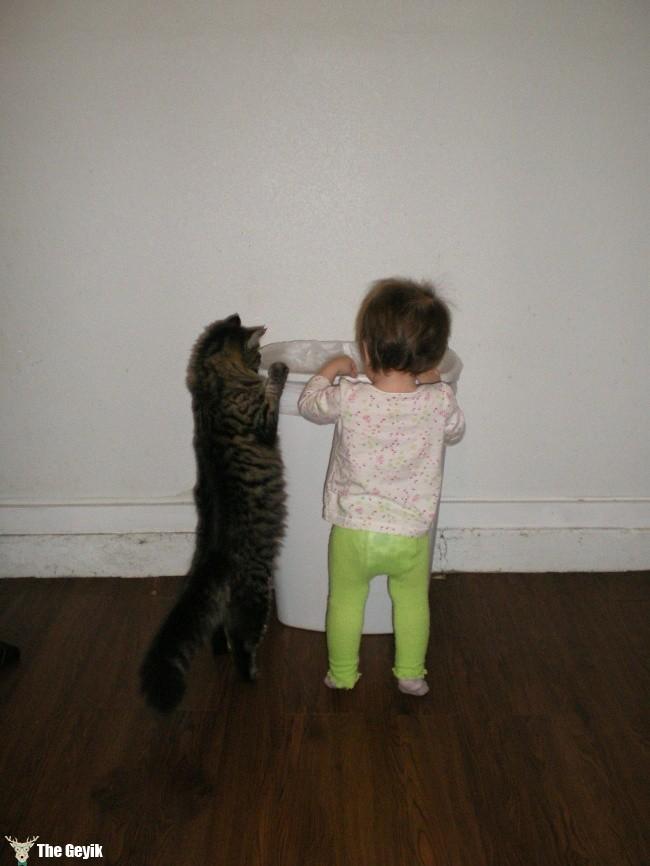 arama kurtarma görevlisi kedi