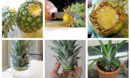 Evde çok kolay bir şekilde sebze meyve yetiştirme yöntemleri