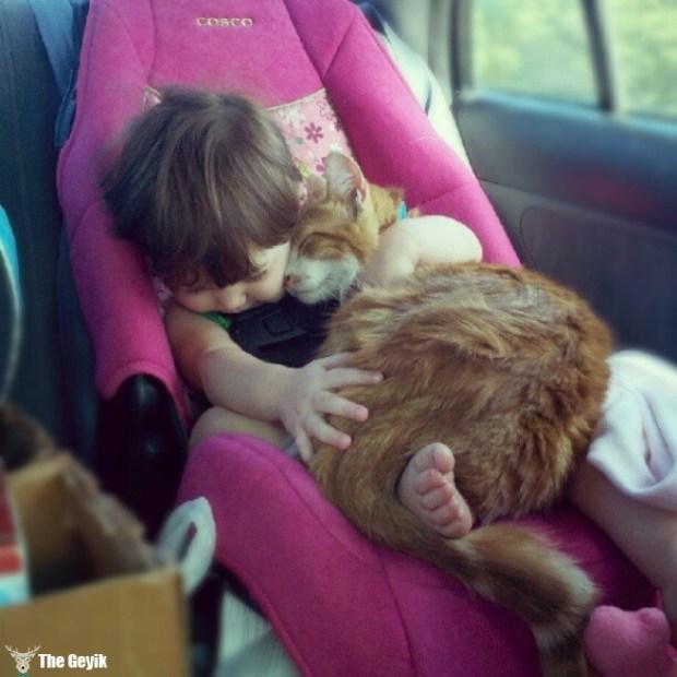 insan dostu kedi