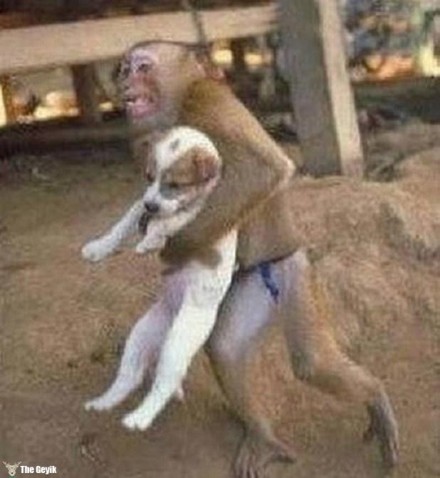 köpek çalan maymun