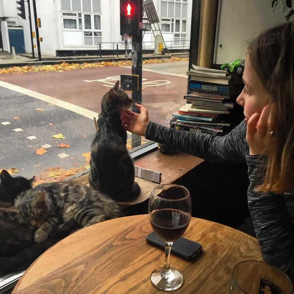 kedi barı uk