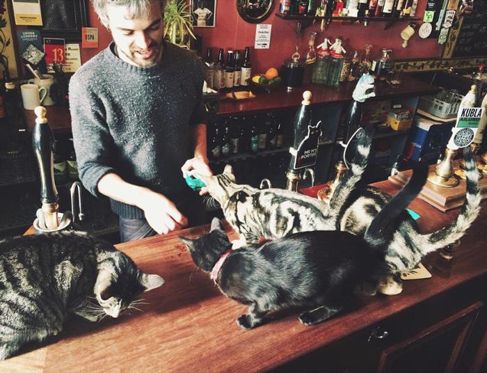 kedi barı