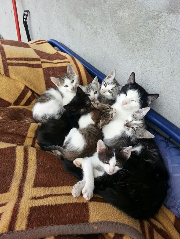 proud-cat-mommies