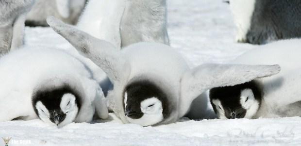 şirin penguen ler