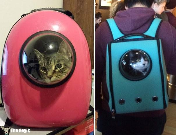 astronot kedi