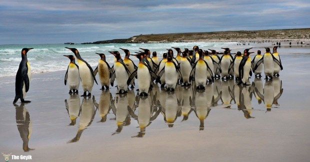 penguen fotoğrafları 3