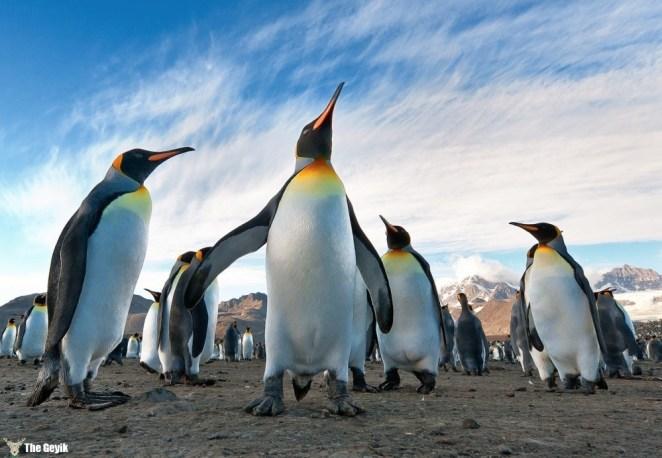 penguen fotoğrafları komik 10