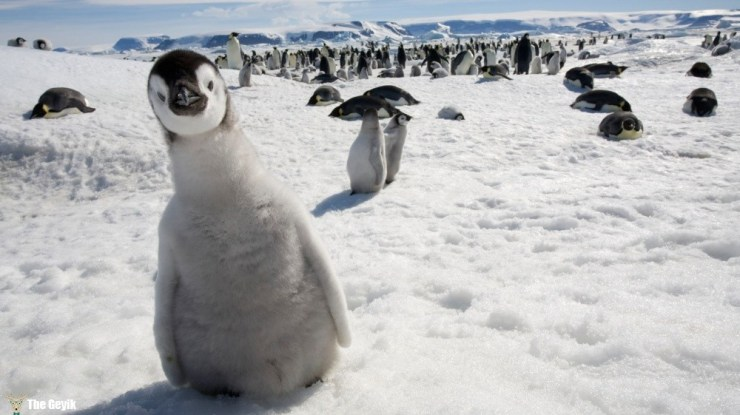 penguen fotoğrafları komik