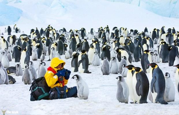 penguenler