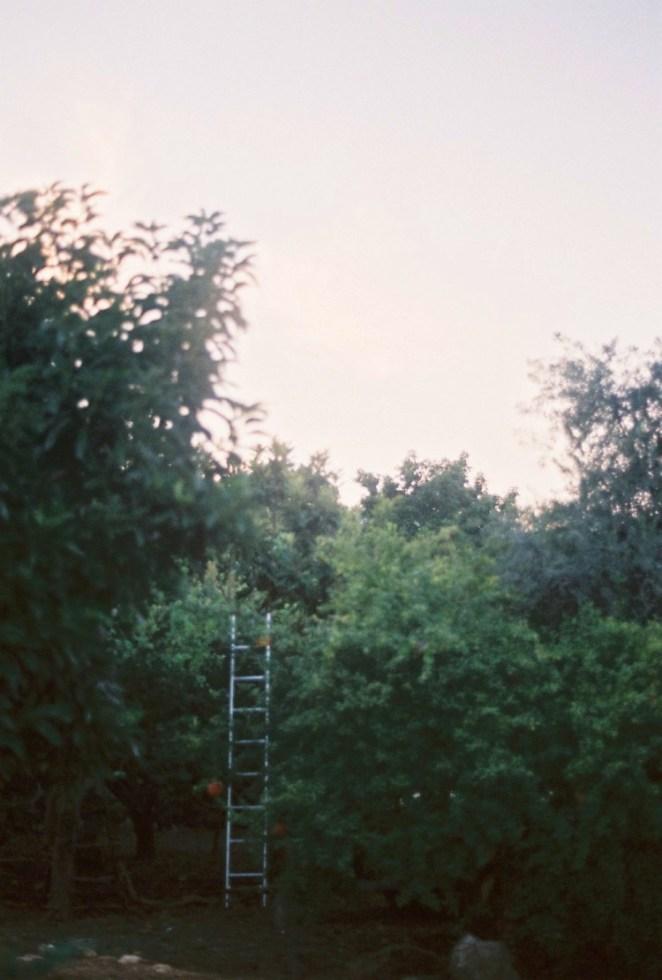 Kamila stanley türkiye fotoğrafları 10