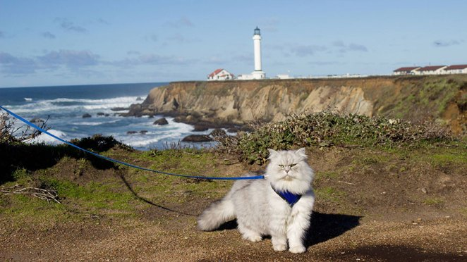 gandalf-cat-travelling-the-world-3